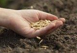 Kaimo reikalų komitetas – prieš situacijos žemės ūkyje tyrimą