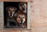 Gaisras gyvūnų prieglaudoje – evakuoti šimtai gyvūnų