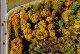 Auksinis ruduo Lietuvoje iš paukščio skrydžio: pasigrožėkite