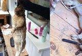 Pašiurpo nuo paviešintų vaizdų: po triušio egzekucijos – naujos detalės