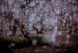 Pavasaris Japonijoje – amą atimančiose nuotraukose