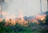 Mažeikių rajone didžiulis miško gaisras suvaldytas