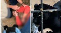 Zoologijos sode jaguaras sukandžiojo asmenukę norėjusią pasidaryti moterį (tv3.lt koliažas)