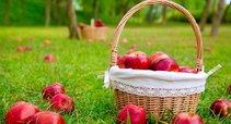 Raudonų obuolių pintinė (nuotr. 123rf.com)