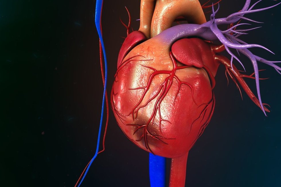 Širdis (nuotr. 123rf.com)