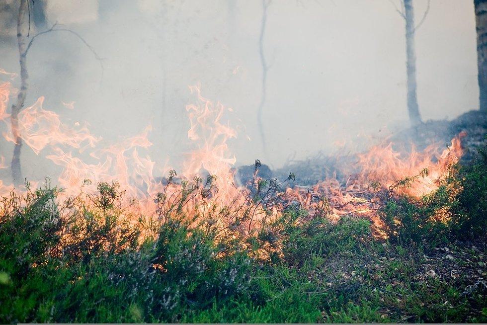 Miško gaisras  (nuotr. Fotodiena.lt)