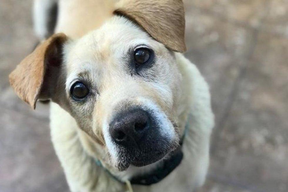 Širdį veriantis reginys: šeimininkų išduotas šuo gyveno purve (nuotr. Instagram)