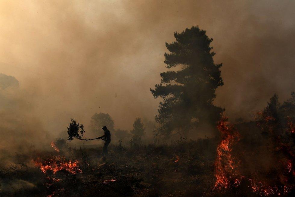 Miško gaisras (nuotr. SCANPIX)