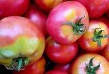 Pomidorus patręškite šiuo mišiniu: nespėsite krauti į krepšius
