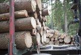 """Po griežto KT sprendimo miškų urėdijos dar liks """"nesutvarkytos"""""""