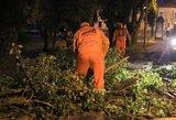 Lietuvą talžė audra – ugniagesiai gavo 92 pranešimus apie nuvirtusius medžius