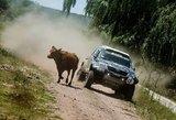 """Benedikto Vanago Dakaro ralio startas: karvė, kojomis išdaužtas priekinis stiklas ir """"pramušta"""" padanga"""