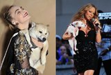 Pozuoja, vedasi ant scenos: kai kurioms žvaigždėms šunys tėra įvaizdžio dalis
