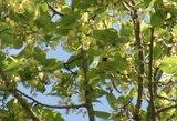 Gamtininkai mato anomaliją – dėl visko kalta sausa, kaitri vasara
