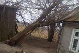 Dėl stipraus vėjo šalyje pradėjo lūžti medžiai