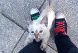 Meilė iš pirmo žvilgsnio: katytė naują šeimininką susistabdė gatvėje