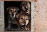 Lazdijų rajone agresyvus šuo įkando 4 metų mergaitei