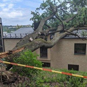 Vilniuje ant namo užvirto du medžiai ir prakirto stogą