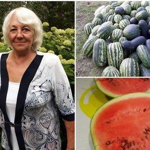 Laimos darže – šimtai arbūzų: išdavė 100 proc veikiančias gudrybes