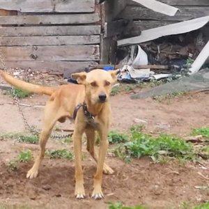 Siaubas Varėnoje: šuo nuo bado tapo gyvu skeletu, bet šeimininkas teisinasi, kad jo – tokia veislė