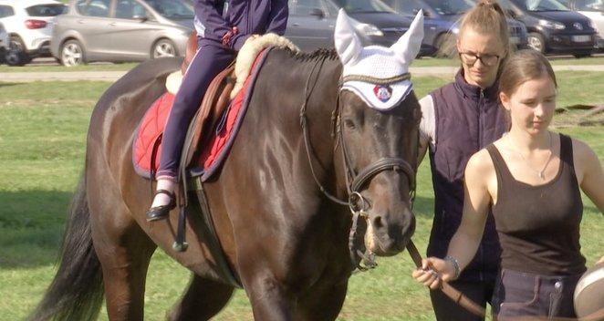 Žirgai Kauno klinikose