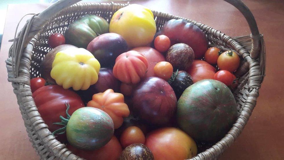 Laimos sode – gausybė arbūzų, pomidorų ir gėlių (nuotr. asm. archyvo)