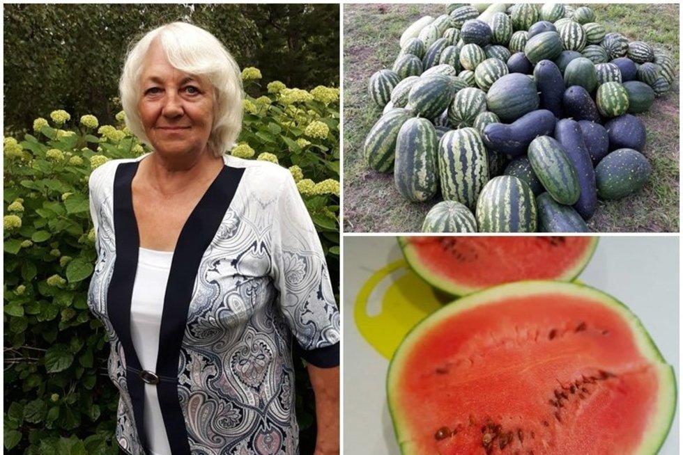 Laimos sode – šimtai arbūzų (nuotr. asm. archyvo)