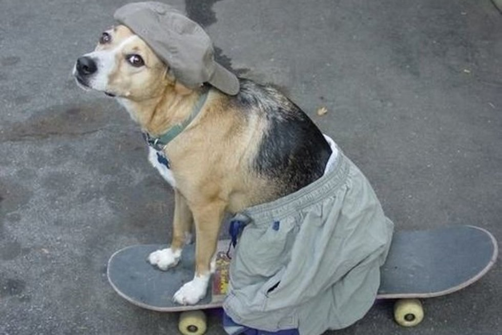 Šuo (nuotr. ebaumsworld.com)