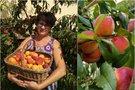Astos kieme – persikų rojus (nuotr. asm. archyvo)