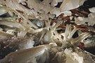 Kristalų urvai Meksikoje