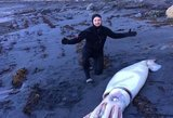 Jūros krante – pribloškiantis radinys: milžiniškas gyvis šokiravo tūkstančius