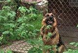 Šalčininkuose į iškvietimą atvykusią policininkę sukandžiojo šuo