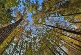 Perbraižo Lietuvos žemėlapį – daugiau miškų ir saugomų teritorijų