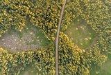 Miškų savininkams – liūdnos dienos: ruošiamas mokestis užguls visus