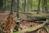 Gelbėtojai įspėja einančius į mišką: įsidėmėkite 3 šeimų padarytas klaidas