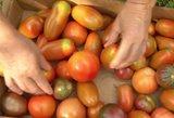 Nežinomas faktas apie pomidorus: pasakė, kokį valgyti yra sveikiau