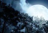 Astrologai paskelbė, kurių zodiako ženklų laukia meilės periodas