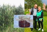 Ritos kankorėžių uogienė – vienintelė tokia Lietuvoje: aukso gyslą atrado miške