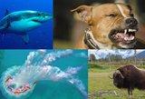 Serijiniai gamtos žudikai: kiekvienais metais nusineša milijonus gyvybių
