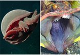 Atima žadą: vandenyno dugne – gąsdinantys padarai