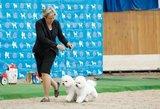 Šunų čempionų gyvenimas: griežtas grafikas, sportas ir SPA procedūros
