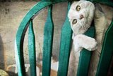 Juokingos fotografijos: gyvūnai prieš baldus