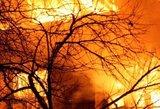Žmonės kaip ugnies fakelai krito pro namo langus: priminė siaubingą tragediją