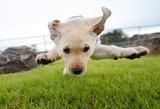 Kelmėje – šunų bėgimo varžybos