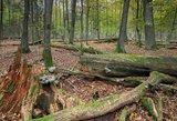 Miške šalia Kauno slėptas itin žiaurus nusikaltimas: auka patyrė susidorojimą
