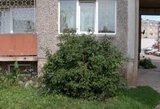 Kraupus radinys Vilniaus daugiabutyje: mirė iš balkono kritęs vyras