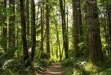 Miškų reformos kritikai ragina išlaikyti urėdijų savarankiškumą