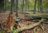 Komitetas siūlo atmesti prezidento veto dėl miško žemės įsigijimų ribojimo