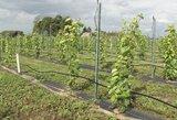 Lietuviai džiaugiasi ypatingu derliumi: šią vasarą suderėjo visai ne pomidorai ar agurkai