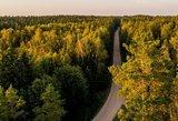 Švedijos ambasada sako perdavusi investuotojų nerimą dėl miškų, bet veto neprašė